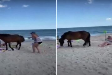 Woman Strikes Wild Horse With A Shovel Not Knowing Horse Is About To Kick Back